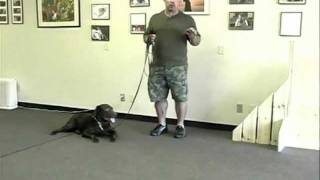 Cleveland Ohio Master Dog Trainer Mans Best Friend / Dog Trainer Now