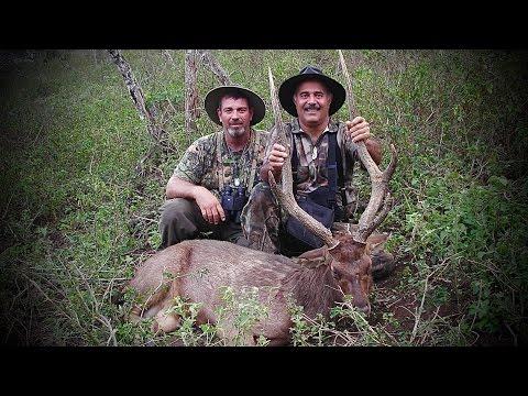 Hunting Rusa deer in New Caledonia part 24