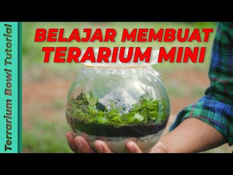 belajar-membuat-terrarium-untuk-pemula-(terarium-mini-tutorial)