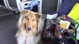 Dog-Vlog  // Дог-влог : колли Алиса и выставка собак в Братиславе  Hundeausstellung DuoDanube