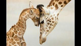 Мир животных: детеныши и их мамы