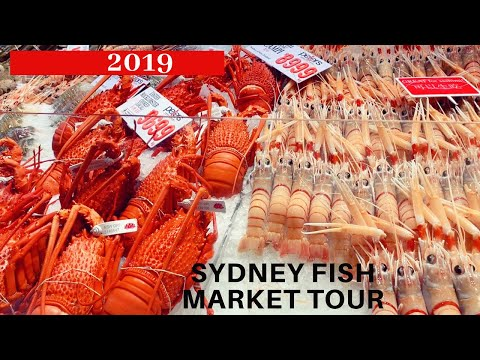 2019 SYDNEY FISH MARKET TOUR