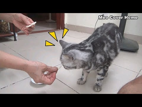 Mother Cat Eating Rice Cake So Yummy | Funny Cat Vines 2019 [Funny Pets]