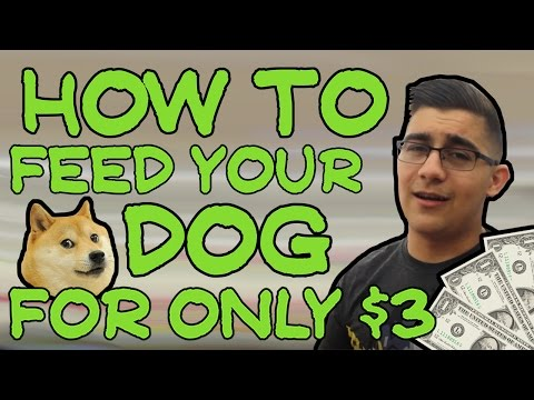 HOW TO FEED YOUR DOG FOR ONLY $3