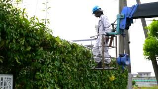 図書館植木剪定作業 日本庭園・ガーデニングの事なら 福岡県久留米市