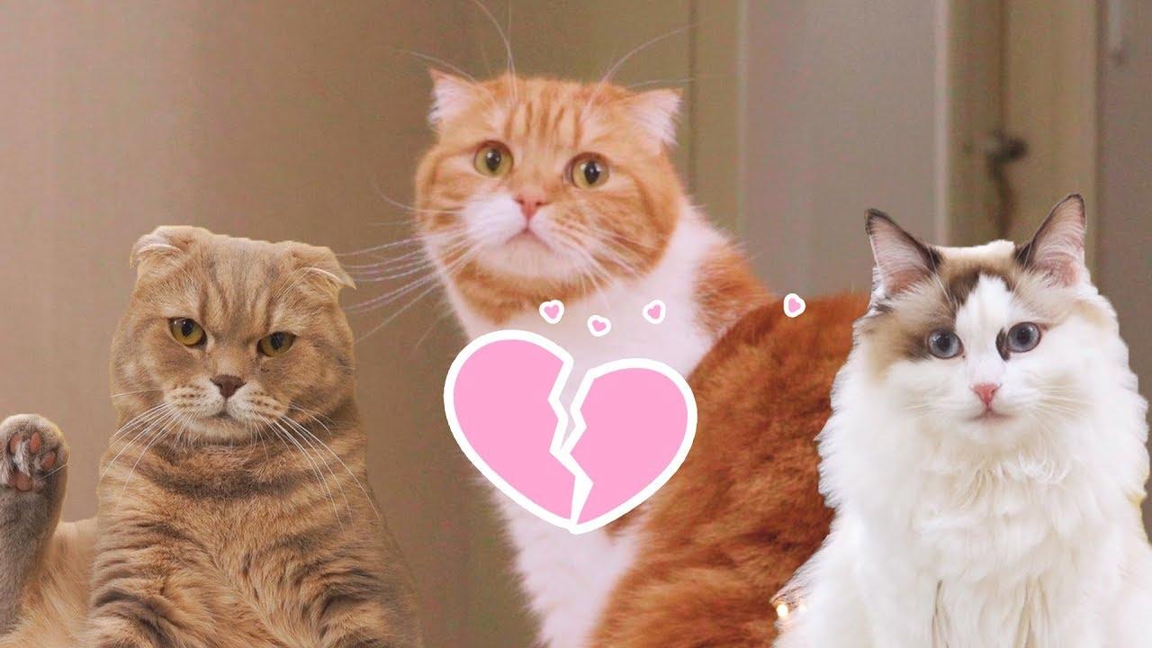눈치없는-러브-브레이커-아빠-고양이