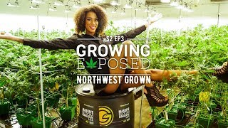 GROWING EXPOSED SEASON 2 EPISODE 3: Northwest Grown