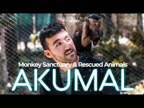🦜🐒SANTUARIO DE MONOS EN AKUMAL | HAY ANIMALES RESCATADOS AQUÍ | CÓMO LLEGAR | QUÉ HACER@sebitastrip