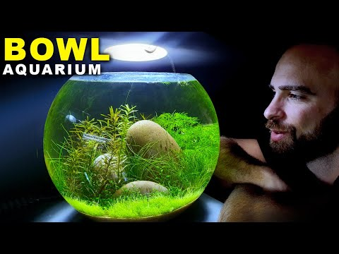 BOWL AQUARIUM: Desk Lamp & No Filter  | MD FISH TANKS