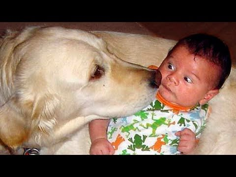 Dog Showing Love to Baby Compilation