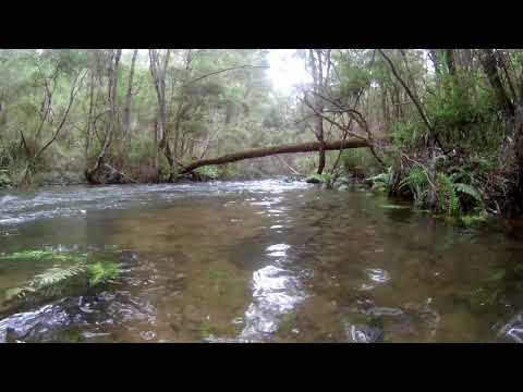 Relaxing River Sounds - Peaceful Forest River -  Yarra River