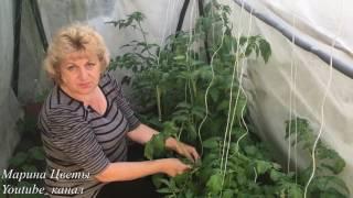 ПОМИДОРЫ   ПОДВЯЗКА  ЭТО ВАЖНО !(ПОМИДОРЫ ПОДВЯЗКА ЭТО ВАЖНО ! Подвязать индетерменантные томаты просто, но не просто. Ведь растение имеет..., 2016-06-11T05:00:00.000Z)