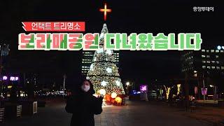 대전 도심 크리스마스 트리 맛집은 여기! '보라…