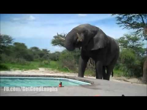 Elephant Just Wants To Drink Some Water | Funny VIDEO! :-D| GGL