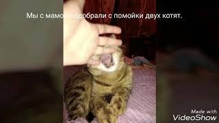 Как умирают кошки?