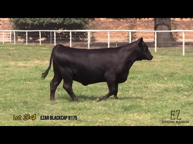 EZ Angus Ranch Lot 34