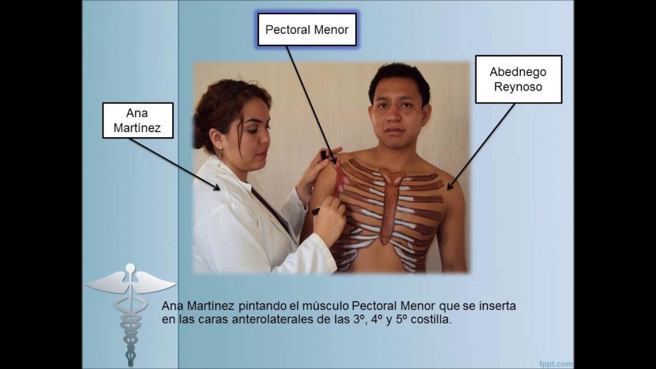 Anatomía de tórax, clavícula y omóplato - YouTube