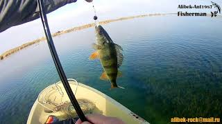 Ловля окуня на спиннинг Аграханский залив