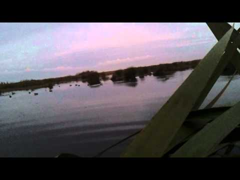 Duck hunting teal