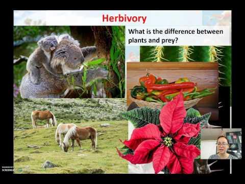 Community Ecology Video #2