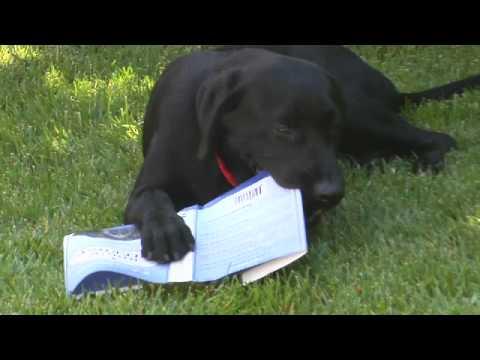 A Dog's Purpose Book Trailer