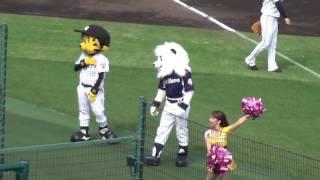 阪神タイガースと埼玉西武ライオンズの交流戦で、トラッキーとレオがじ...