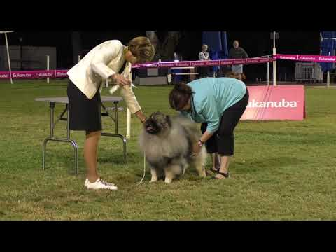 09 June 2019 Ipswich Kennel Club Show Two