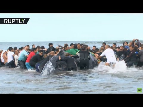 Rescue Operation: Argentinians Help Return Stranded Whale To Sea