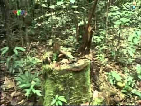 Ký sự  trên dòng Amazon