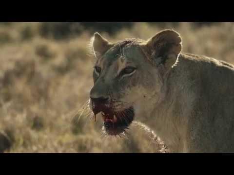 Luxury Kenya Safaris - The Explorations Company