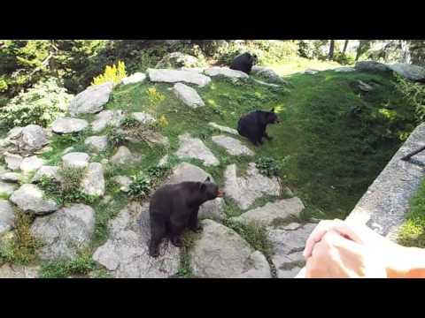 Grandfather Mountain animal habitat