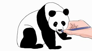 How to Draw a Panda Easy Step by Step