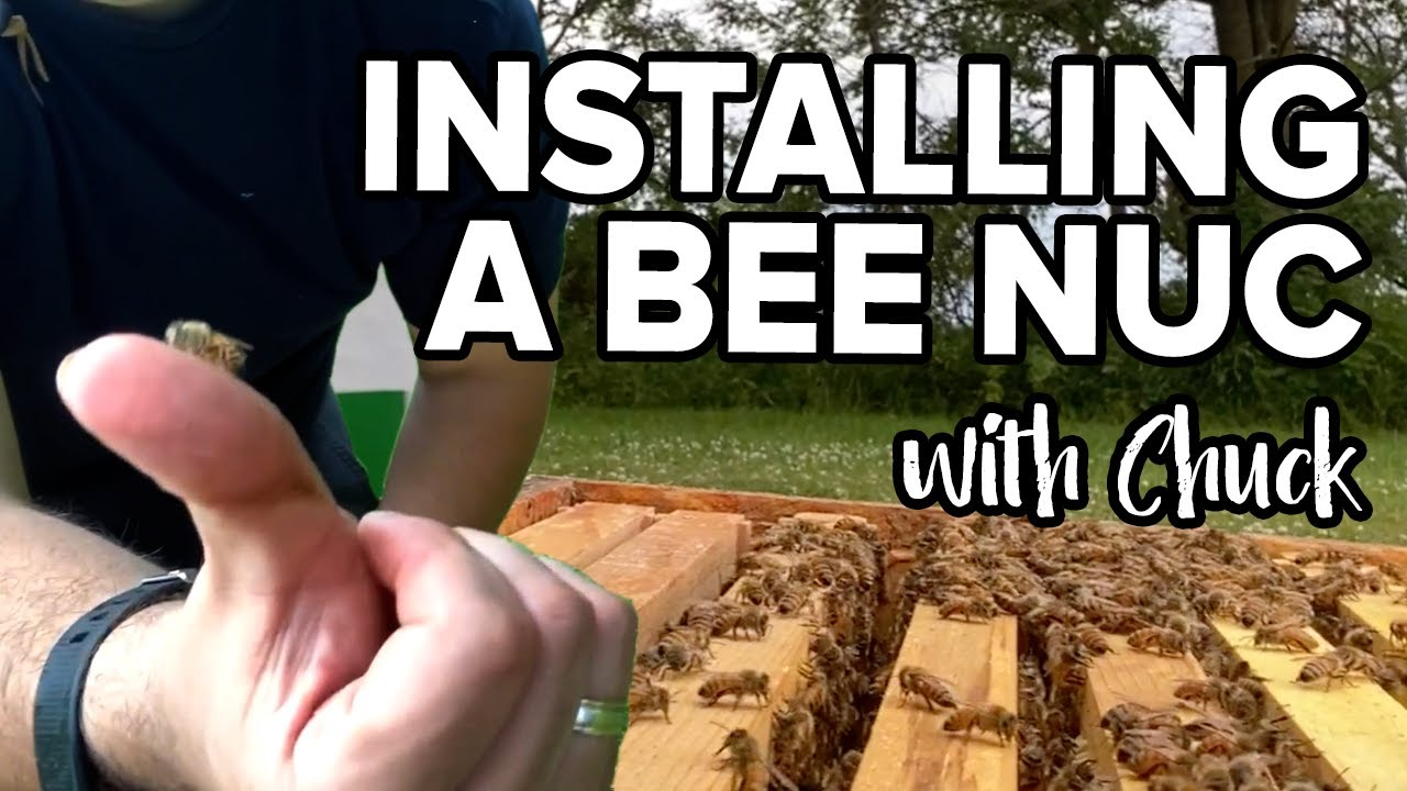Installing A Honey Bee Nuc With Chuck