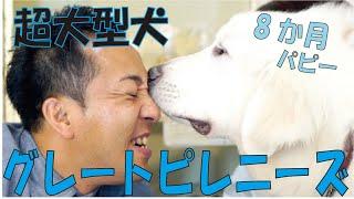 番組提供:ペットライン株式会社(http://www.petline.co.jp/) 8か月の...