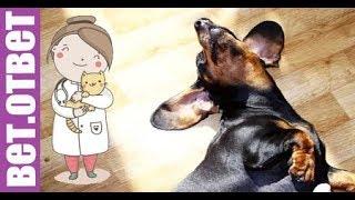 Если заметили странное поведение собаки, задумайся! Лучший корм. ВетОтвет
