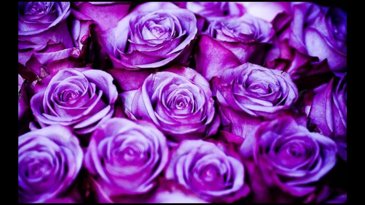 Different types of roses youtube for Buy black and blue roses