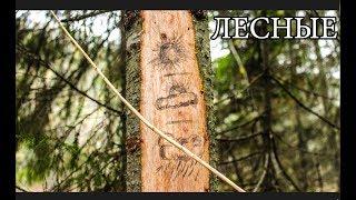 Примитивные технологии - ЕЛОВЫЙ БАРОМЕТР | Метеостанция в лесу