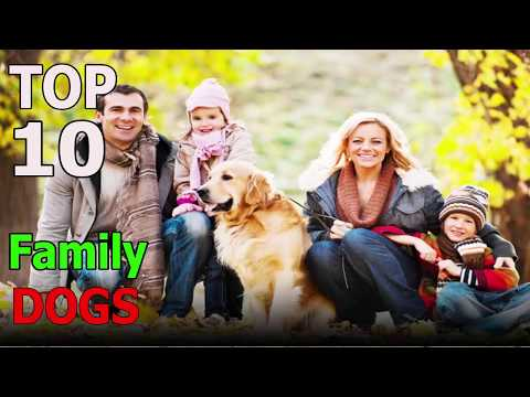 Top 10 family dog breeds | Top 10 animals