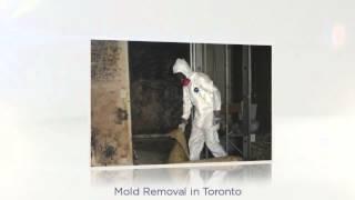 Mold Removal Hamilton