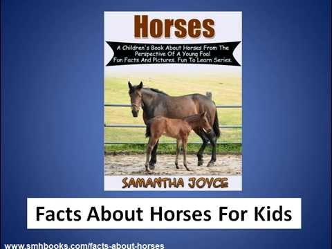 Facts About Horses For Kids - Fun Facts And Pictures - YouTube