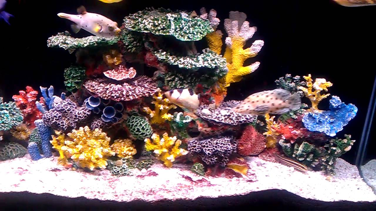 Instant reef 90 gallon saltwater aquarium youtube for Artificial coral reef aquarium decoration inserts