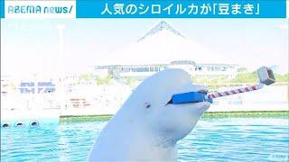来月2日の節分を前に、横浜市の水族館では子どもたちが一風変わった豆まきイベントを楽しみました。 豆まきをしているのは、横浜・金沢区の八景島シーパラダイスで人気 ...