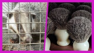 Terrified Badgers Bludgeoned for Paint, Shaving, Makeup Brushes