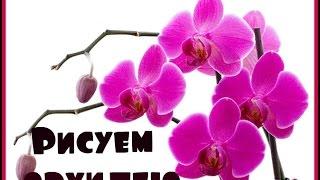 Дизайн ногтей! Рисуем орхидею!(В данном видео я покажу поэтапно как рисовать орхидею!Надеюсь все понятно и доходчиво объяснила!) http://vk.com/ba..., 2015-05-06T15:56:59.000Z)