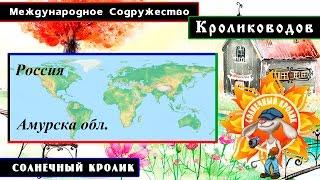 Кролики Амурской обл. Зейский район посёлок Береговой