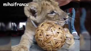 mihaifrancu-Best Of Cute Baby Animal Videos Compilation 2016