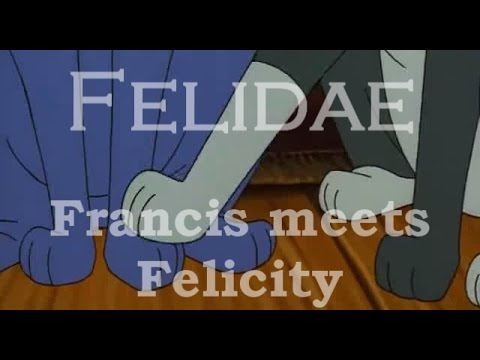 Felidae Francis Meets Felicity Youtube