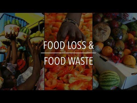 FAO Policy Series: Food Loss & Food Waste