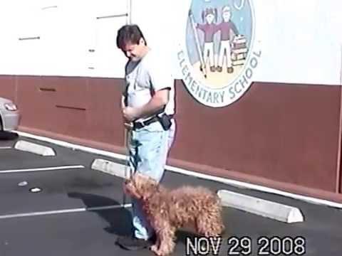 leash training   dog walking basics
