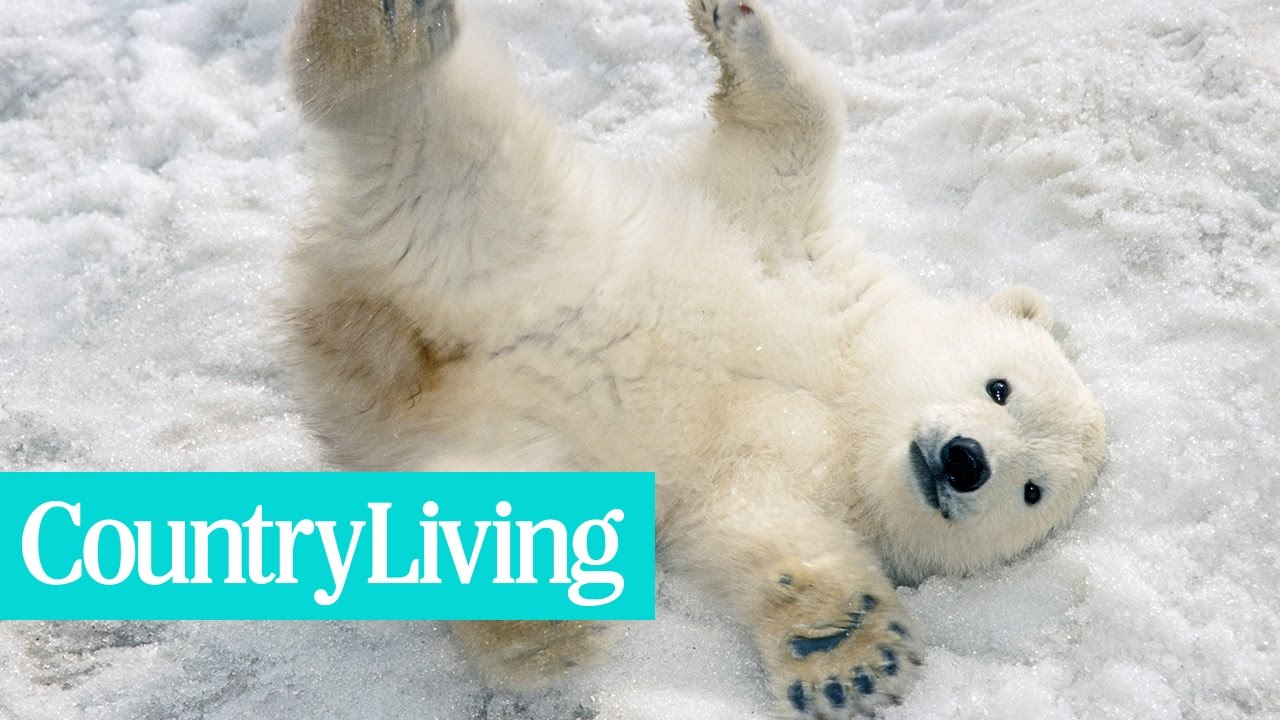 This Baby Polar Bear in Berlin Needs a Name | Country Living